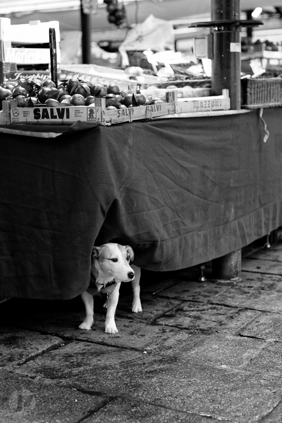 Dogs of venice - Rialto Fish Market
