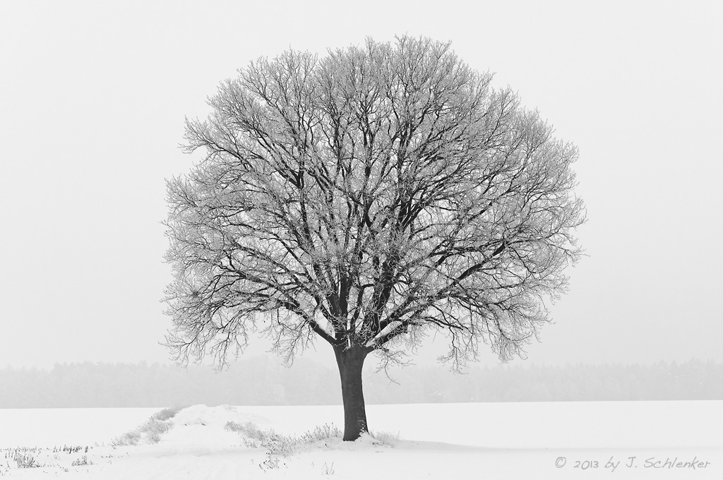 Winter-Baum-Verden